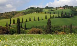 Wedding Venues in Tuscany - landscape 1